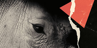 A close-up of a Rhinoceros' eye with a graphical treatment akin to political protest posters of the 1980s